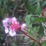 潅木の下に咲く花