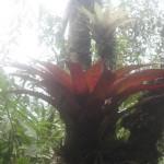 寄生性の植物