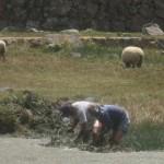 草を刈る農夫